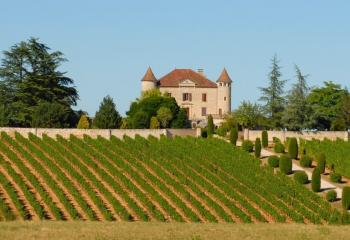 French Chateau and Vineyard